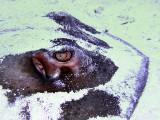 Ray Buried in Sand Headshot 2