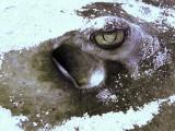 Ray Buried in Sand Headshot 3