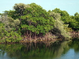 Mangroves Princess Alexandra Nature Reserve 04