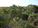 Vegetation from Above Little Water Cay