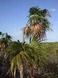 Vegetation from Above Little Water Cay 04.jpg