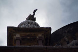 Silhouette of Indian Vulture on Chhatris