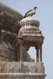 Indian Vultures on the Chhatris Orchha 03