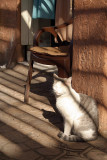 The Cat Sat in the Sun