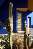 Cactii Garden