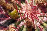 Close up Cactus