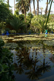 Palms in the Pond