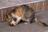 Cat Eating Chicken Head