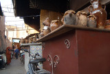 Yummy Sheeps Heads