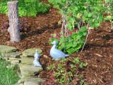 My cheesy blue  geese.