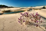 dunas floridas