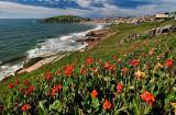 flores florianopolis