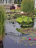 Lily Pond Area
