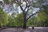Tompkin's Park