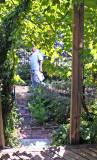 Grape Arbor - Liz Christy Garden