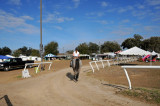 Horses in the Sun Show Preparations