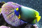 Birch Aquarium - La Jolla, California