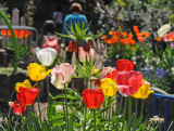 Spring 2010 - Brooklyn Botanic Garden