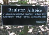 Calycanthus - Allspice