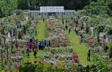 Rose Gardens - Brooklyn Botanic Gardens