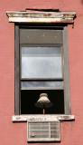 Resident Window