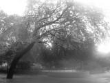 Park View - Foggy Lens