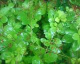 Rainy Day - Unknown Plant