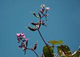 Conservatory Garden - Lala Bean Flowers