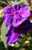 Conservatory Garden - Unknown Flower
