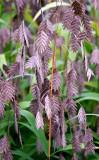 Conservatory Garden - Unknown Plant