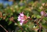 Unknown Bush Flower