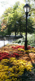 Chrysanthemum Garden at the Foot of the Mall