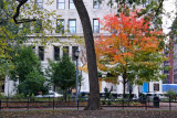 Maple Tree & NYU's Grey Gallery