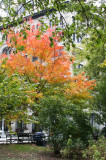 Fall Foliage at Washington Square East