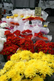 Farmer's Market - Chrysanthemums
