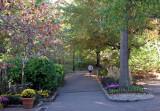 Central Park Ramble