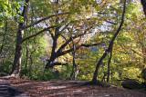 Ramble Path View