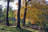 Wooded Area below Belvedere Castle
