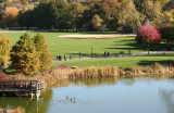 Turtle Pond, Canadian Geese & Great Lawn