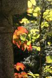 Fall Foliage from Belvedere Castle Window