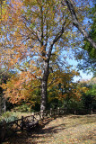 Belvedere Castle Wooded Area