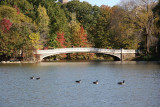 Bow Bridge & Canadian Geese - View from the West Shore