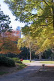 Fall Foliage - Central Park South