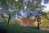 Fall Foliage - Central Park South at Cop Cot Hill