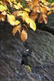 Rock Wall, Foliage & Grass