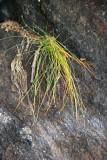 Rock Wall & Grass