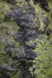 Rock Wall & Lichen