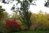 Fall - Garden View