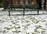 Park Bench & Scholar Tree Foliage on Snow