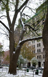 Elm Tree, NYU Main Building & University Place